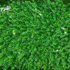 Tuong-cay-gia_0001-768×432 (1)