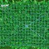 Tuong-cay-gia_0002-768×560 (1)
